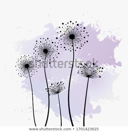 Vector illustration of flowers dandelion. Stock photo © Vertyr