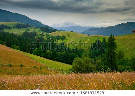 hegy · tájkép · fenyőfa · domboldal · napos · idő · lucfenyő - stock fotó © kotenko