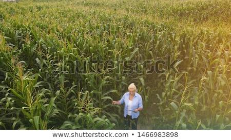 kadın · çiftçi · tablet · mısır · alan - stok fotoğraf © stevanovicigor