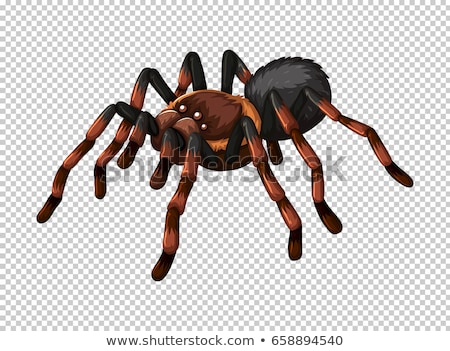 Wild spider on transparent background Stock photo © bluering