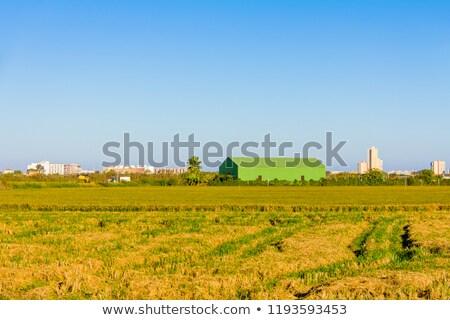 Növény locsol organikus farm Spanyolország kert Stock fotó © IS2