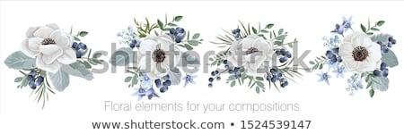 crisantemo · floral · blanco · negro · colores · flor · resumen - foto stock © frescomovie