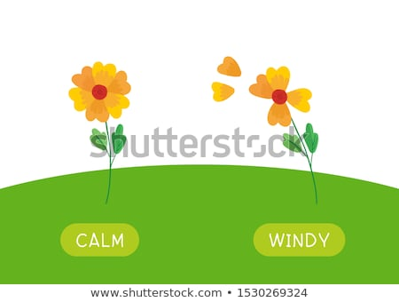 English Opposite Word on Green Background Stock photo © bluering