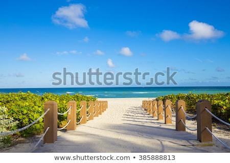 beach walkway stock photo © luissantos84