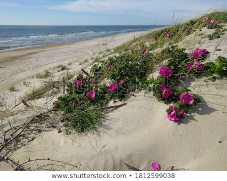 Plage rose blanche bois nature feuille Photo stock © bdspn