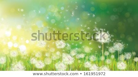 fű · virágok · tavasz · természet · kert · háttér - stock fotó © adamson
