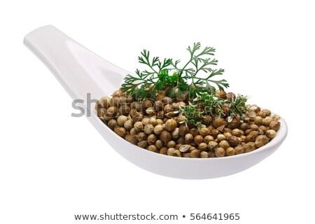 kişniş · tohumları · gıda · bitki · ot · yalıtılmış - stok fotoğraf © maxsol7