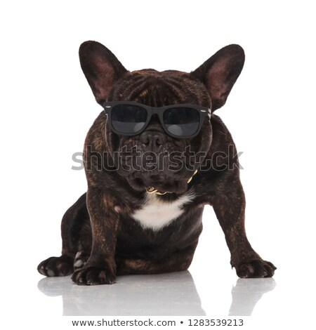 french bulldog wearing golden collar and glasses looking to side Stock photo © feedough