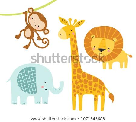 conjunto · girafa · ilustração · amor · casal - foto stock © colematt