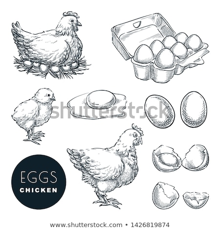 vector set of chicken and egg stock fotó © olllikeballoon