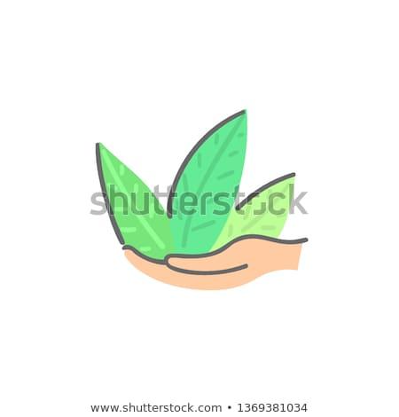 Insan eller yeşil bitki soyut Stok fotoğraf © user_10144511