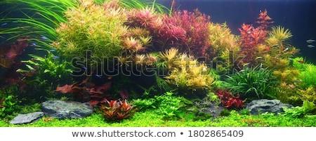 Planted aquarium Stock photo © bdspn