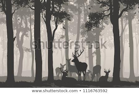Rodziny lesie scena ilustracja niebo drzewo Zdjęcia stock © colematt