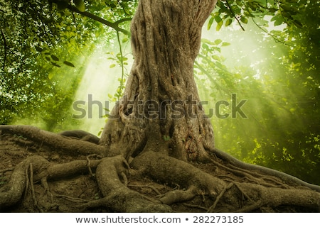öreg fatörzs moha erdő környezeti kép Stock fotó © andreasberheide