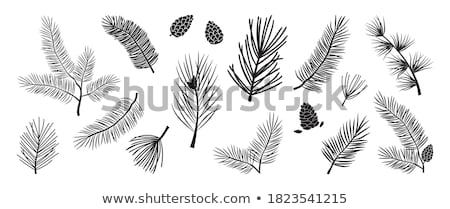 Trees Pine with Branches Natural Plants Vector Stock photo © robuart