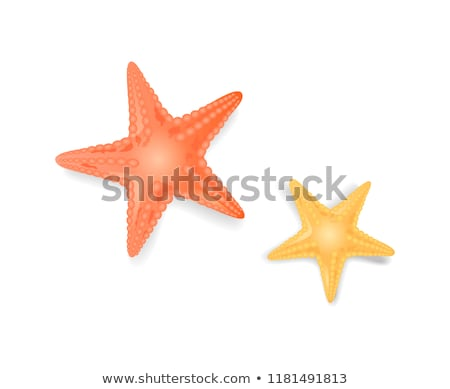 Colorful Cartoon Sea Star Stock photo © cidepix