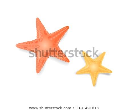 colorful cartoon sea star stock photo © cidepix