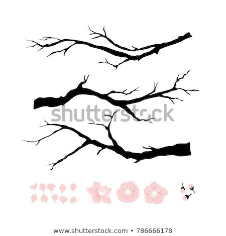 Sakura coleção árvore conjunto vintage Foto stock © pikepicture