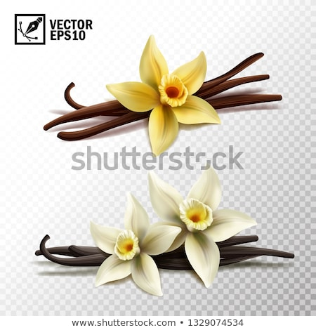 Set of vanilla flower dried sticks food ingredient vector Stock photo © LoopAll