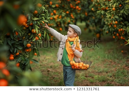 Cute nino jardín nina árbol frutas Foto stock © galitskaya