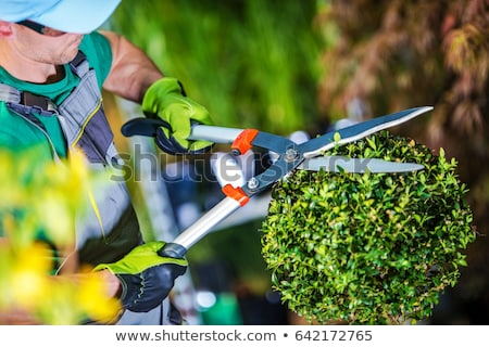Professional male gardener taking care and cutting the plants Stock photo © dash
