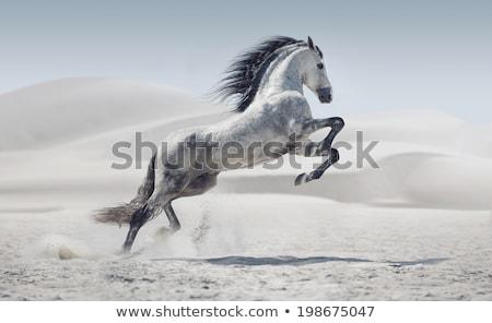 лошади · луговой · еды · трава · природы · горные - Сток-фото © chrisroll