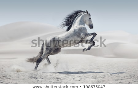 horse in a prairie stock photo © chrisroll