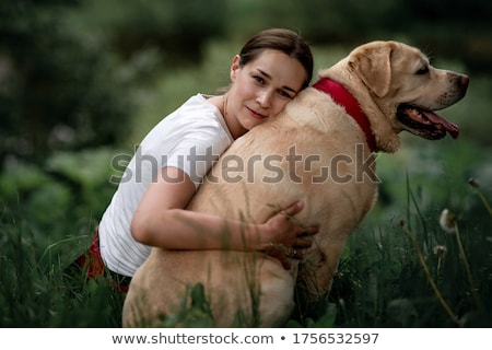 żółty · labrador · biały · tle - zdjęcia stock © eriklam
