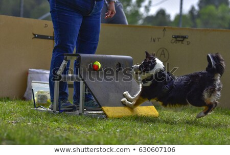 flyball on the beach stock photo © cynoclub