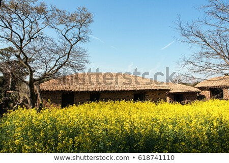 folk village sun Stock photo © Galyna