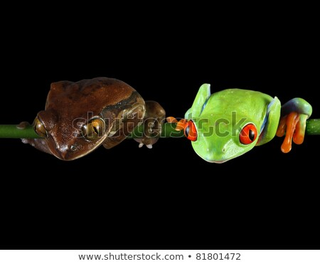 Peacock frog (clipping path) Stock photo © macropixel