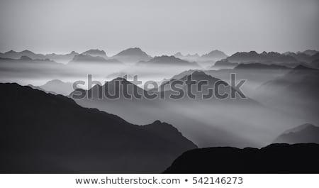 feketefehér · hegy · tájkép · elöl · fa · szépség - stock fotó © nuttakit