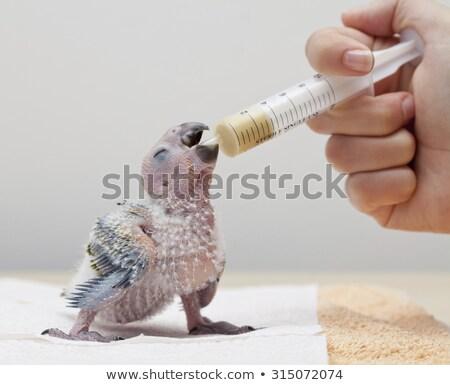 bebek · papağan · komik · yalıtılmış · beyaz - stok fotoğraf © RAStudio
