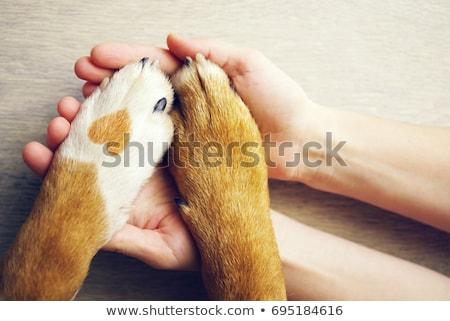 köpek · pençe · el · sarı · insan · eli · sevmek - stok fotoğraf © melpomene