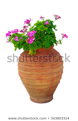 Geranium flowers in Santorini Stock photo © ElinaManninen