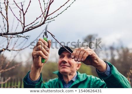 Stockfoto: Fruitboom · voorjaar · boom · werknemer