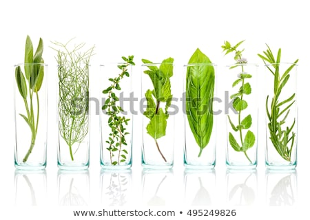 Zsálya izolált fehér étel háttér zöld Stock fotó © joannawnuk