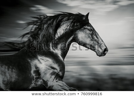 Stockfoto: Zwarte · paard · rapper · gekleurd · cartoon · illustratie