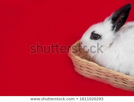 Güzel tavşan küçük havuç beyaz Stok fotoğraf © taden