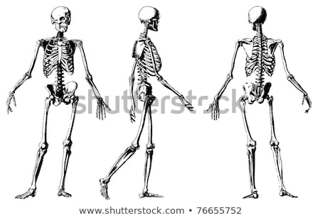 Human Skeleton Side Retro Stock photo © patrimonio