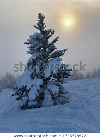 wintersunset with trees stock photo © w20er