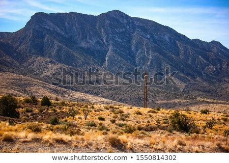 Cactus growing in desert, Death Valley National Park, California Stock photo © bmonteny