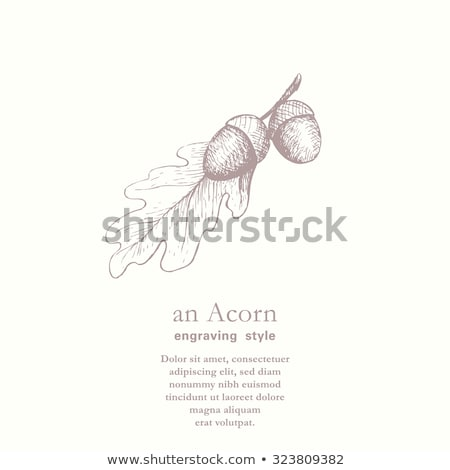 Old autumn card with acorns and oak leaves, vector illustration Stock photo © carodi
