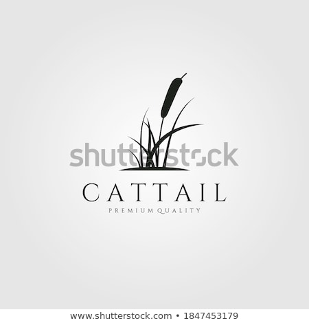 Cattail of reeds stock photo © marekusz