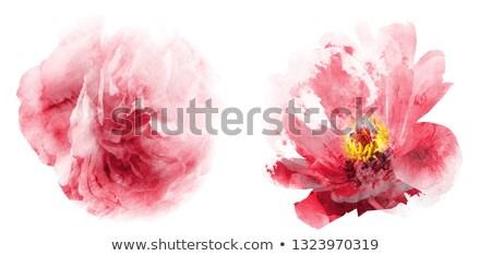 различный украшения цветок аннотация природы лист Сток-фото © morrmota