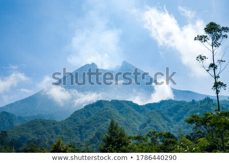 beautiful view of the crater of the volcano is covered by forest stock photo © discovod