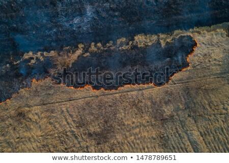 Secar grama incêndio florestal cinza pinho Foto stock © xuanhuongho
