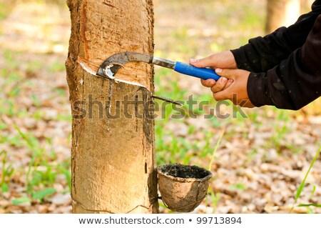 Kauçuk Tayland lateks doğal ağaç Stok fotoğraf © Mps197