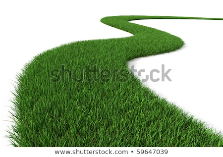 green grass way stock photo © make