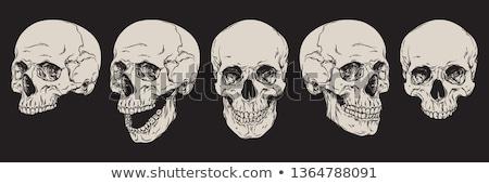 Stockfoto: Halloween · schedel · ingesteld · vector · drie · wijs
